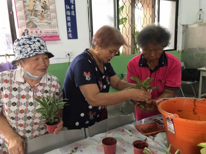 水苔植物的園藝體驗需要彼此互助,專注於每一顆水苔球,也凝聚了長輩們的感情。